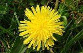 How to Make organische alternatieven voor Roundup Weed Killer