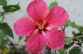 Hoe maak je hete roze met gekleurde acryl