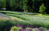 Creëren van een mediterrane stijl tuin