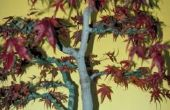 Maple bomen met paarse bladeren