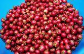 Hoe te verwijderen van de vlek van een Cranberry sap