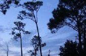 Over Florida pensioen Mobile Home parken