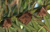 Biotische factoren in de dieren van het tropische regenwoud