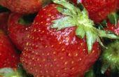 Kan je groeien aardbeien uit een BES?