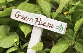 De effecten van licht op de groei van planten Bean