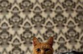 Wat betekent het als katten sokken verzamelen?