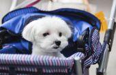 Hoe maak je een huisdier wandelwagen uit een Baby wandelwagen