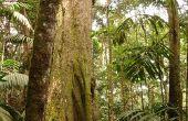 Rainforest Craft projecten voor kinderen