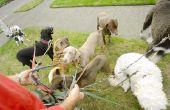 Een lijst van de loopbaan met honden