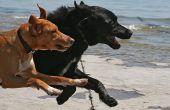 Pepermunt hond behandelen recept