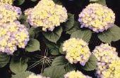 Welke bloemen groeien goed in een Oost-blootstelling?
