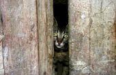 Dosering van instructies voor de frontlinie Plus voor katten