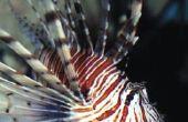 Alkalinity in een zoutwater Aquarium