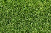 Doodt ammoniak gras?