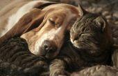 Hoe om een hond aan een kat