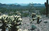 Kenmerken van een Cactus
