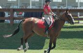 Regels met betrekking tot de fiscaal aftrekbare schenking van een paard