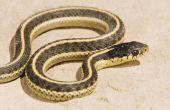 Soorten slangen in Noord-Carolina