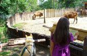Kinderen dier Spelletjes