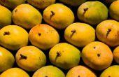 De geschiedenis van de mangosalsa