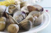 Wat Is de Diference tussen witte & bruine Shell kokkels?