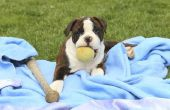 How to Make hond dekens