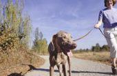 Tekenen van constipatie bij honden