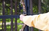 Hoe te Restring een Bear Whitetail jacht boog