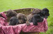 How to Make een voor verkoop teken voor pups