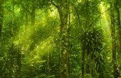Abiotische factoren van een regenwoud
