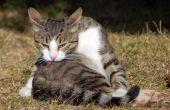 Hoe te stoppen met een kat uit over het verzorgen van zichzelf