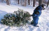 Wat Is de oorsprong van de kerstboom?