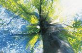 Hoe Plant een boom