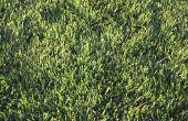 Zal gazon zaad groeien als ik strooi het op de top van het vuil?