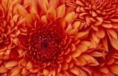 Bloemen die in seizoen in oktober