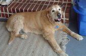 Cortison-medicijnen voor honden