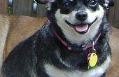 Psoriasis bij honden