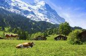 De eetcultuur van de Zwitserse