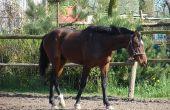 Hoe om te berekenen hoeveel gewicht een paard kan dragen