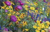 Vaste planten die bloeien alle lente en zomer