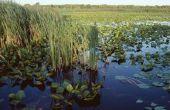 Abiotische factoren in natuurlijke Wetlands
