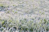 Hoe Winter voorbereiden een gazon