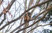 Hoe Elimineer eekhoorn problemen