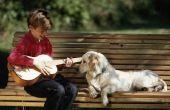 Projecten van de wetenschap op de gevolgen van muziek voor honden