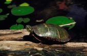 Wat dieren eten schildpadden?