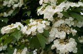 Bloemen & planten die het goed in de koude & warmte doen