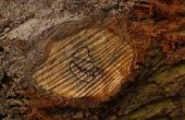 Wat te zetten op een houten plak voor een middelpunt