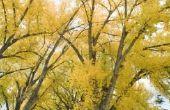 Planten voor een gematigde bladverliezende wouden