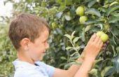 Welke fruitbomen groeien goed in Ohio?