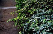 Buiten planten die niet volledige zonlicht vereisen